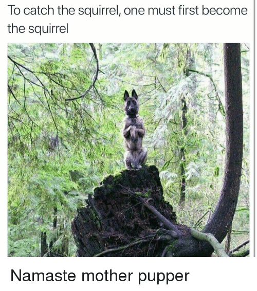 Funny, Namaste, and Squirrel: lo catch the squirrel, one must first become  the squirrel Namaste mother pupper