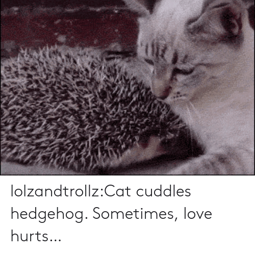 cuddles: lolzandtrollz:Cat cuddles hedgehog. Sometimes, love hurts…