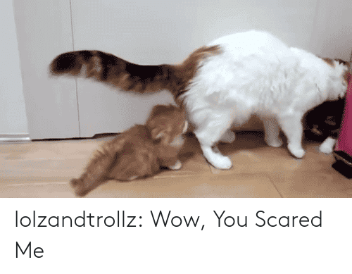 Tumblr, Wow, and Blog: lolzandtrollz:  Wow, You Scared Me