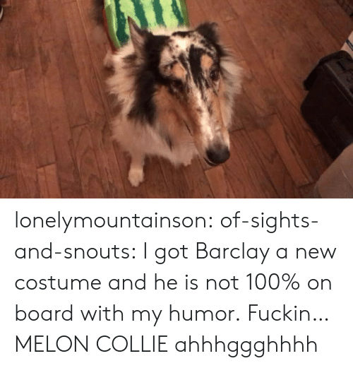 on board: lonelymountainson: of-sights-and-snouts:  I got Barclay a new costume and he is not 100% on board with my humor.  Fuckin…MELON COLLIE ahhhggghhhh