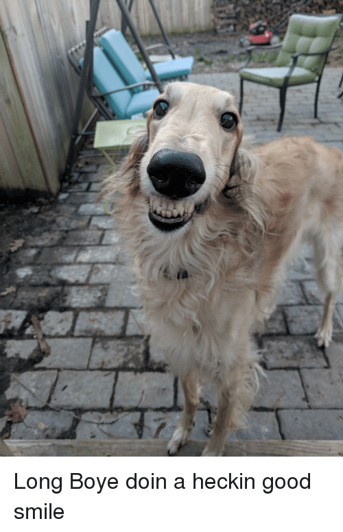 Good, Smile, and Heckin: Long Boye doin a heckin good smile