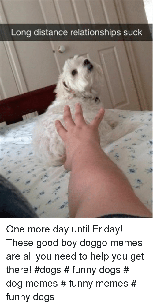 Dogs, Friday, and Funny: Long distance relationships suck  2s One more day until Friday! These good boy doggo memes are all you need to help you get there! #dogs # funny dogs # dog memes # funny memes # funny dogs