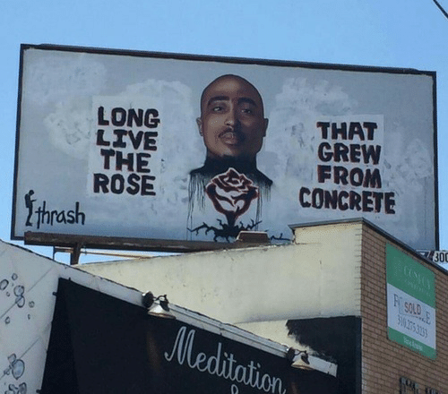 thrash: LONG  LIVE  THE  ROSE  THAT  GREW  FROM  CONCRETE  thrash  300  SOLD