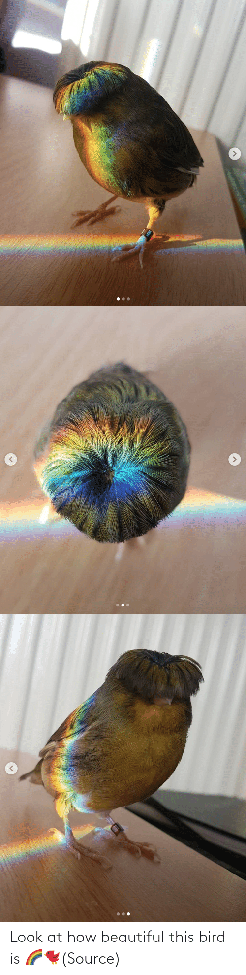 beautiful: Look at how beautiful this bird is🌈🐦(Source)