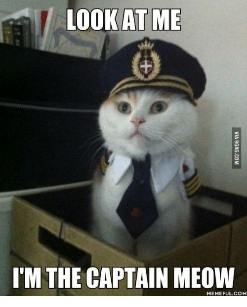 Look At Me Im The Captain: LOOK AT ME  I'M THE CAPTAIN MEOW  MEMEFUL COM