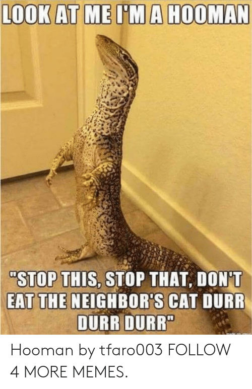 """durr: LOOK AT ME I'MA HOOMAN  """"STOP THIS, STOP THAT, DON'T  EAT THE NEIGHBOR'S CAT DURR  DURR DURR"""" Hooman by tfaro003 FOLLOW 4 MORE MEMES."""