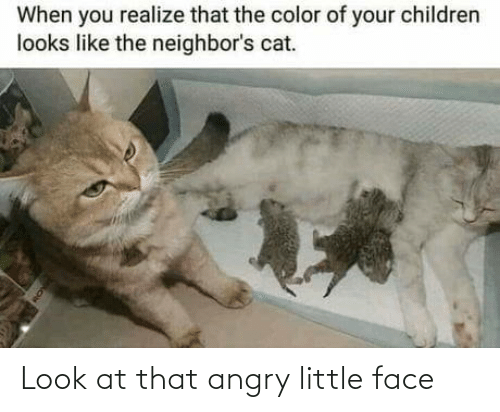 Look At: Look at that angry little face