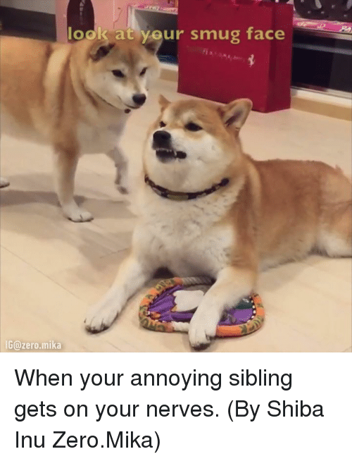 Smug Faces: look at your smug face  IG zero mika When your annoying sibling gets on your nerves. (By Shiba Inu Zero.Mika)