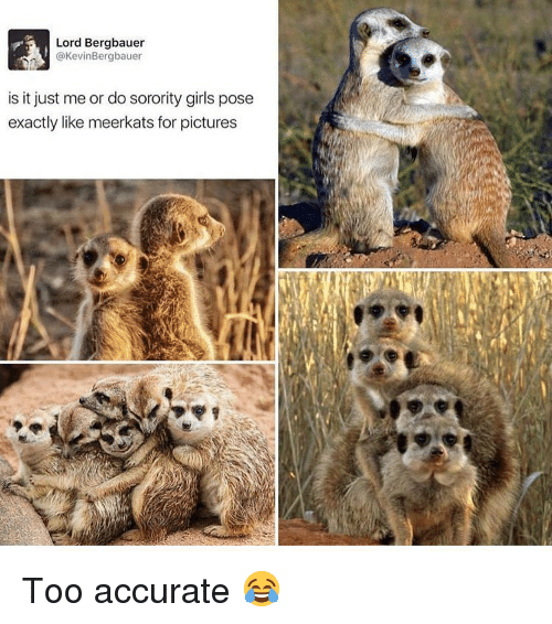 Sorority: Lord Bergbauer  @KevinBergbauer  is it just me or do sorority girls pose  exactly like meerkats for pictures Too accurate 😂