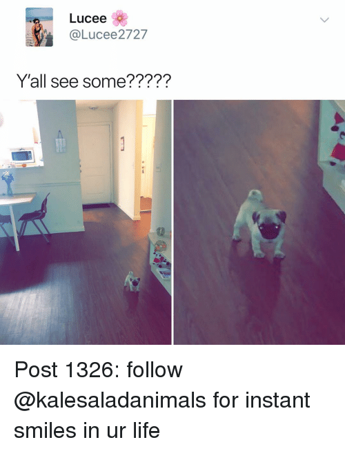 Life, Memes, and Smiles: Lucee  @Lucee2727  Y'all see some????? Post 1326: follow @kalesaladanimals for instant smiles in ur life