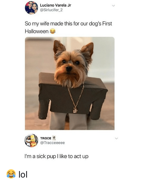 Dogs, Halloween, and Lol: Luciano Varela Jr  @Sirlucifer 2  So my wife made this for our dog's First  Halloween  @Tracceeeee  I'm a sick pup I like to act up 😂 lol