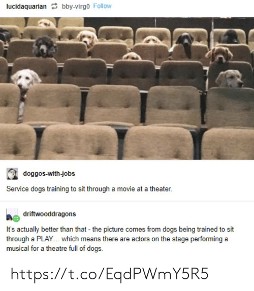 Dogs, Memes, and Jobs: lucidaquarian bby-virgo Follow  doggos-with-jobs  Service dogs training to sit through a movie at a theater.  driftwooddragons  It's actually better than that - the picture comes from dogs being trained to sit  through a PLAY... which means there are actors on the stage performing a  musical for a theatre full of dogs https://t.co/EqdPWmY5R5