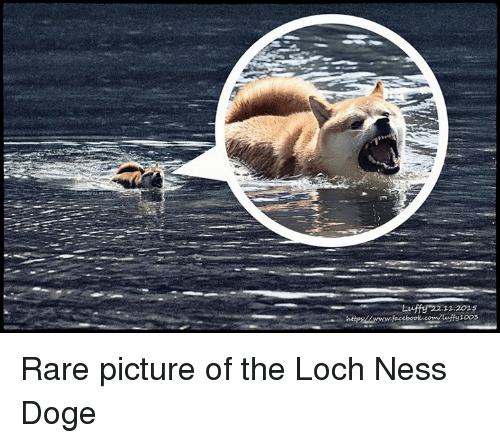 The Loch: Luffy 22.11.2015  1003 Rare picture of the Loch Ness Doge