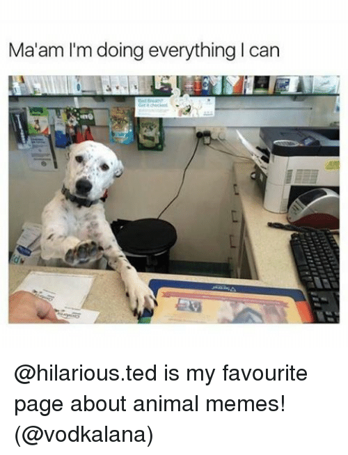 Memes, Ted, and 🤖: Ma'am I'm doing everything l can @hilarious.ted is my favourite page about animal memes! (@vodkalana)