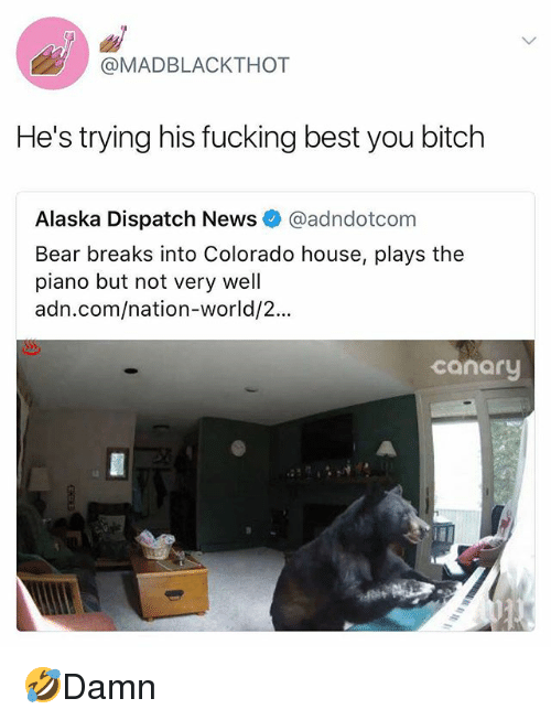 Bitch, Fucking, and Memes: @MADBLACKTHOT  He's trying his fucking best you bitch  Alaska Dispatch News @adndotcom  Bear breaks into Colorado house, plays the  piano but not very well  adn.com/nation-world/2...  canary 🤣Damn