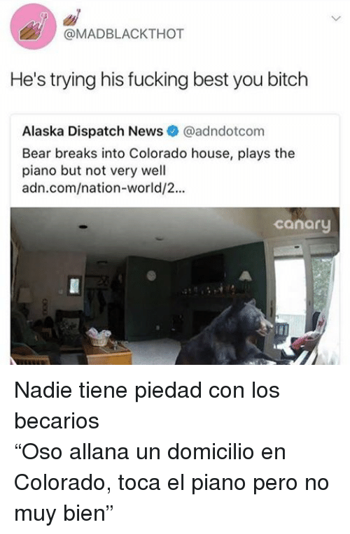 "Bitch, Fucking, and News: @MADBLACKTHOT  He's trying his fucking best you bitch  Alaska Dispatch News@adndotcom  Bear breaks into Colorado house, plays the  piano but not very well  adn.com/nation-world/2...  canary <p>Nadie tiene piedad con los becarios </p><p>""Oso allana un domicilio en Colorado, toca el piano pero no muy bien""<br/></p>"