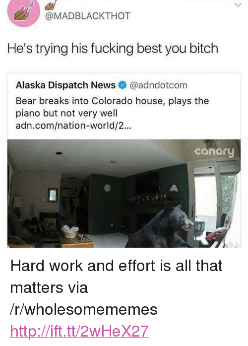"Bitch, Fucking, and News: @MADBLACKTHOT  He's trying his fucking best you bitch  Alaska Dispatch News @adndotcom  Bear breaks into Colorado house, plays the  piano but not very well  adn.com/nation-world/2...  canary <p>Hard work and effort is all that matters via /r/wholesomememes <a href=""http://ift.tt/2wHeX27"">http://ift.tt/2wHeX27</a></p>"