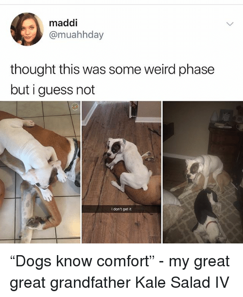 """Maddi: maddi  @muahhday  thought this was some weird phase  but i guess not  I don't get it """"Dogs know comfort"""" - my great great grandfather Kale Salad IV"""