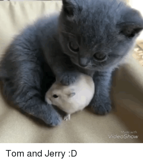 Funny, Tom and Jerry, and Made: Made with  VideoShow Tom and Jerry :D