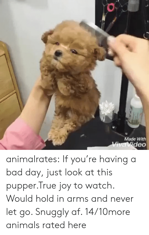 Hold In: Made With  Viva Video animalrates:  If you're having a bad day, just look at this pupper.True joy to watch. Would hold in arms and never let go. Snuggly af. 14/10more animals rated here