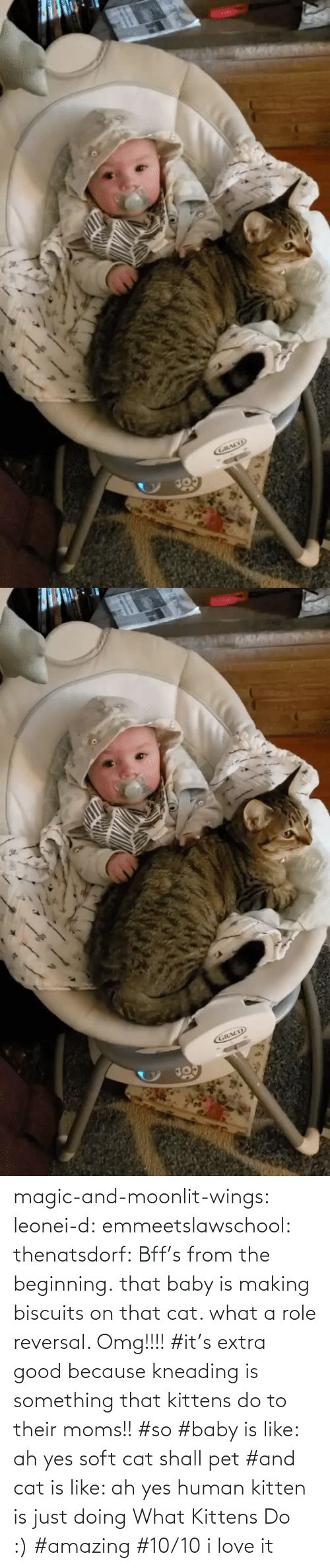Tagged: magic-and-moonlit-wings: leonei-d:  emmeetslawschool:  thenatsdorf: Bff's from the beginning. that baby is making biscuits on that cat. what a role reversal.    Omg!!!!     #it's extra good because kneading is something that kittens do to their moms!! #so #baby is like: ah yes soft cat shall pet #and cat is like: ah yes human kitten is just doing What Kittens Do :) #amazing #10/10 i love it
