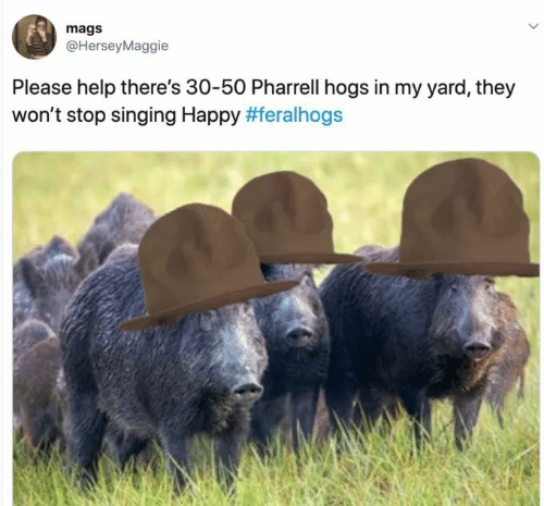 pharrell: mags  @HerseyMaggie  Please help there's 30-50 Pharrell hogs in my yard, they  won't stop singing Happy