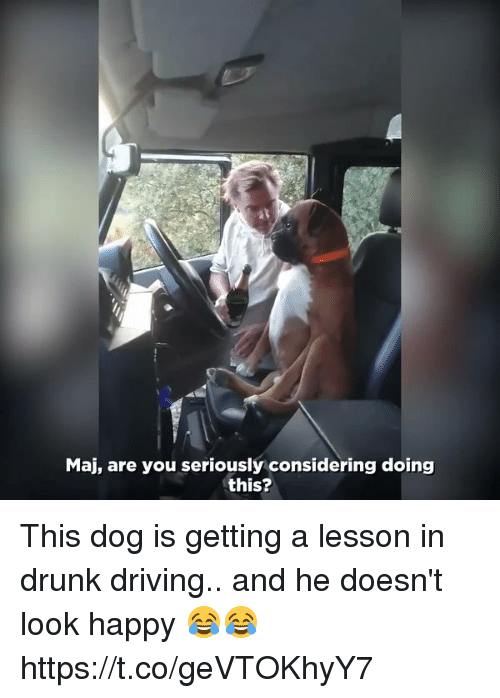 drunk driving: Maj, are you seriously considering doing  this? This dog is getting a lesson in drunk driving.. and he doesn't look happy 😂😂 https://t.co/geVTOKhyY7