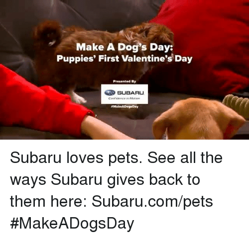 Memes, 🤖, and Subaru: Make A Dog's Day:  Puppies' First Valentine's Day  Presented By  SUBARU  #Make ADogsDay Subaru loves pets. See all the ways Subaru gives back to them here: Subaru.com/pets #MakeADogsDay