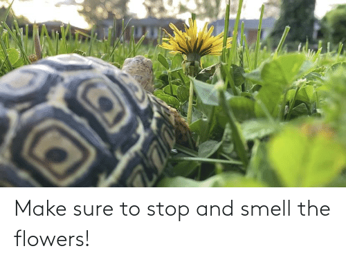 Flowers: Make sure to stop and smell the flowers!