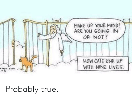 your mind: MAKE UP YOUR MIND!  ARE YOU GOING IN  OR NOT?  HOW CATS END UP  WITH NINE LIVES.  Cen Probably true.