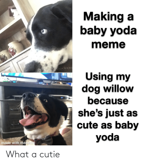 making a: Making a  baby yoda  meme  Using my  dog willow  because  %24  she's just as  cute as baby  yoda  made with mematic What a cutie