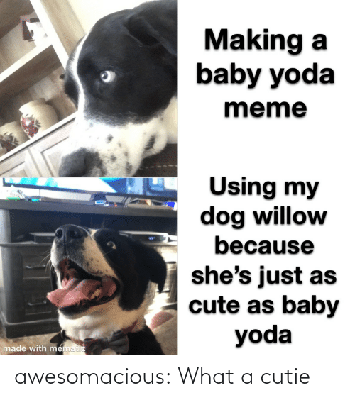 making a: Making a  baby yoda  meme  Using my  dog willow  because  %24  she's just as  cute as baby  yoda  made with mematic awesomacious:  What a cutie
