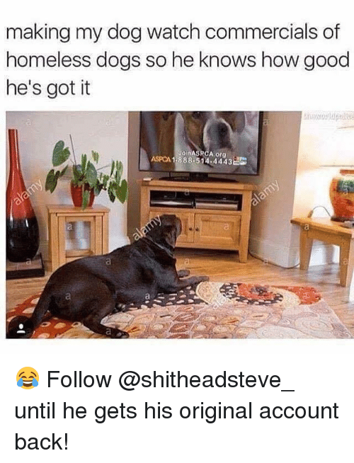 Aspca: making my dog watch commercials of  homeless dogs so he knows how good  he's got it  Join A  A org  ASPCA 1-888 514 4443 😂 Follow @shitheadsteve_ until he gets his original account back!