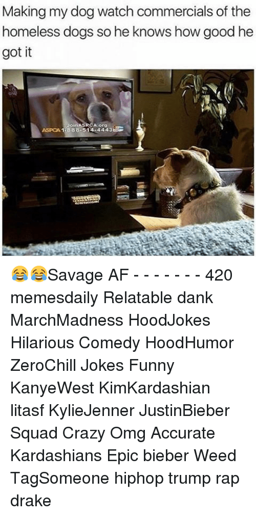 Aspca: Making my dog watch commercials of the  homeless dogs so he knows how good he  got it  ASPCA 1 888-514 4443EG 😂😂Savage AF - - - - - - - 420 memesdaily Relatable dank MarchMadness HoodJokes Hilarious Comedy HoodHumor ZeroChill Jokes Funny KanyeWest KimKardashian litasf KylieJenner JustinBieber Squad Crazy Omg Accurate Kardashians Epic bieber Weed TagSomeone hiphop trump rap drake