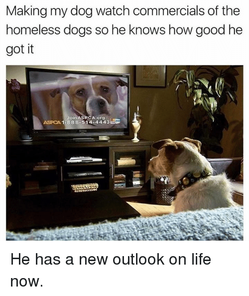 Aspca: Making my dog watch commercials of the  homeless dogs so he knows how good he  got it  1.388.514.4443  ASPCA He has a new outlook on life now.