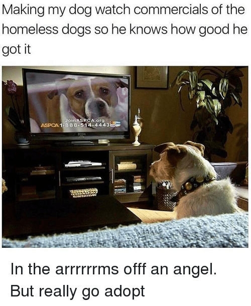 Aspca: Making my dog watch commercials of the  homeless dogs so he knows how good he  got it  Join ASPCA org  ASPCA 1-888-514-4443 In the arrrrrrms offf an angel. But really go adopt