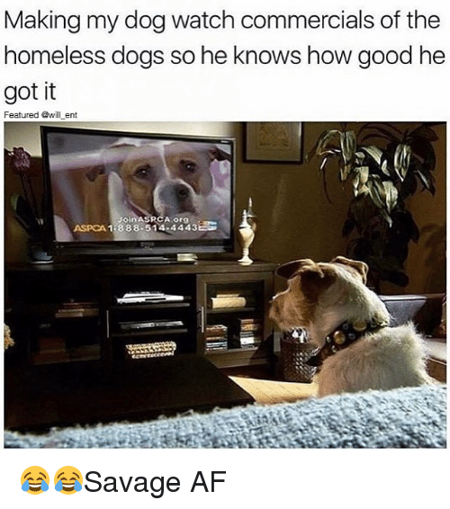 Aspca: Making my dog watch commercials of the  homeless dogs so he knows how good he  got it  Featured @will ent  oin  PCA org  ASPCA 1-888-514-4443 😂😂Savage AF
