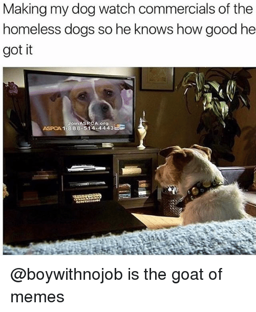 Aspca: Making my dog watch commercials of the  homeless dogs so he knows how good he  got it  Aorgo  ASPCA 1-888-514-44438 @boywithnojob is the goat of memes