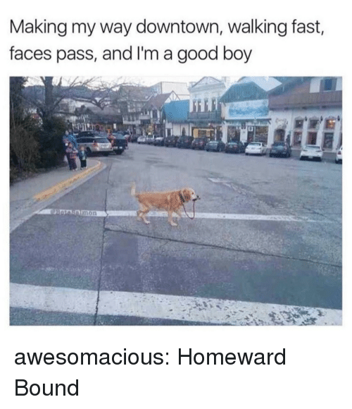 Tumblr, Blog, and Good: Making my way downtown, walking fast,  faces pass, and I'm a good boy  mon awesomacious:  Homeward Bound