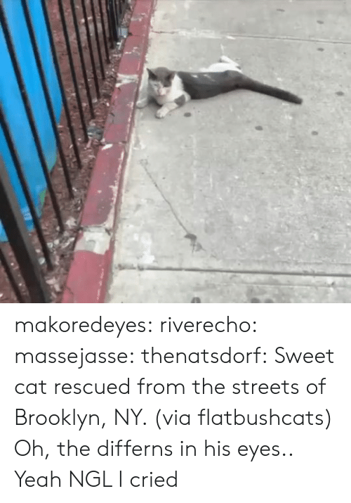 Brooklyn: makoredeyes:  riverecho: massejasse:  thenatsdorf: Sweet cat rescued from the streets of Brooklyn, NY. (via flatbushcats) Oh, the differns in his eyes..     Yeah NGL I cried