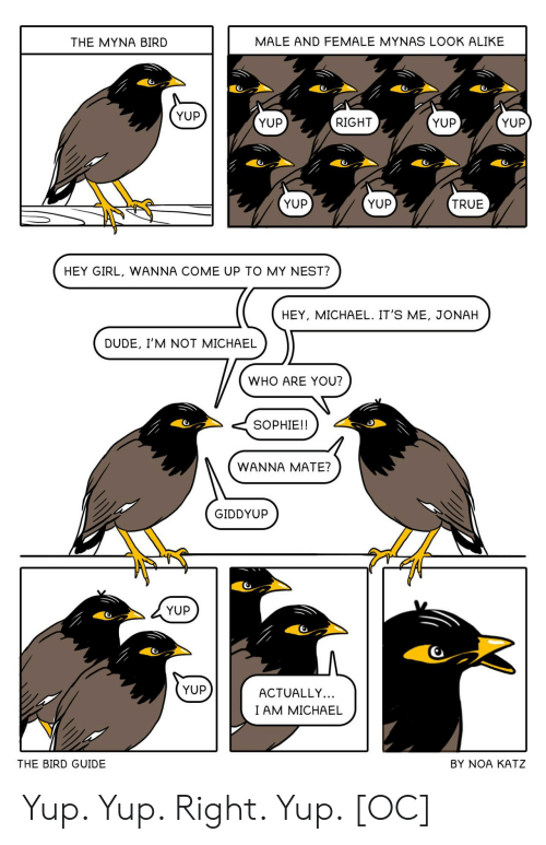 guide: MALE AND FEMALE MYNAS LOOK ALIKE  THE MYNA BIRD  YUP  YUP  YUP  RIGHT  YUP  YUP  YUP  TRUE  HEY GIRL, WANNA COME UP TO MY NEST?  HEY, MICHAEL. IT'S ME, JONAH  DUDE, I'M NOT MICHAEL  WHO ARE YOU?  SOPHIE!!  WANNA MATE?  GIDDYUP  YUP  YUP  ACTUALLY...  I AM MICHAEL  THE BIRD GUIDE  BY NOA KATZ Yup. Yup. Right. Yup. [OC]