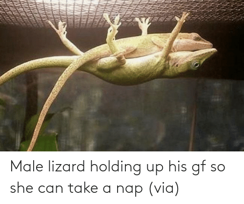 Holding: Male lizard holding up his gf so she can take a nap (via)