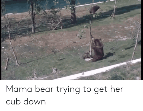Bear, Her, and Mama: Mama bear trying to get her cub down