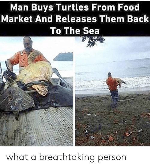 Food, Back, and Turtles: Man Buys Turtles From Food  Market And Releases Them Back  To The Sea  95 what a breathtaking person