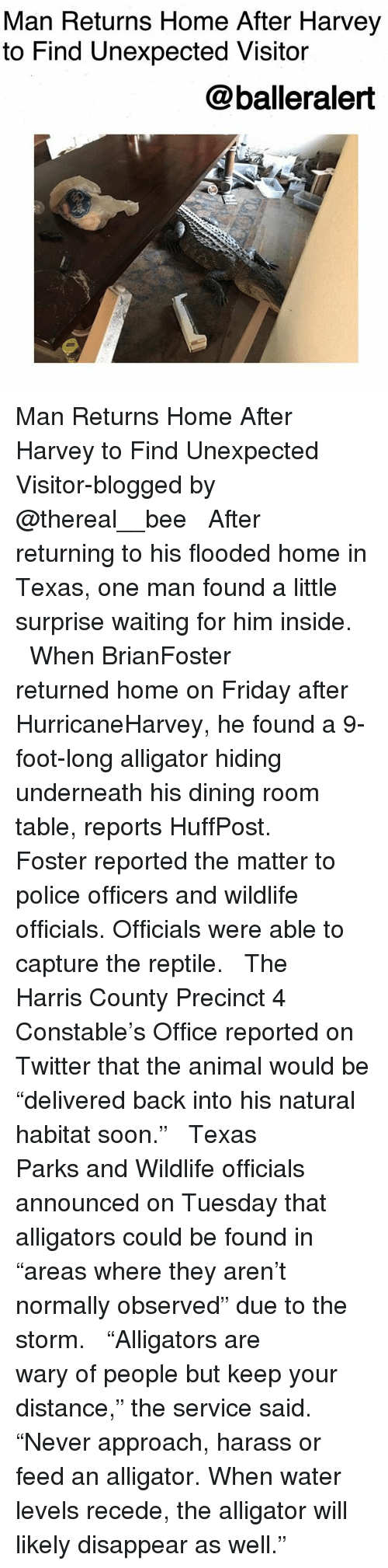 """Friday, Memes, and Police: Man Returns Home After Harvey  to Find Unexpected Visitor  @balleralert Man Returns Home After Harvey to Find Unexpected Visitor-blogged by @thereal__bee ⠀⠀⠀⠀⠀⠀⠀⠀⠀ ⠀⠀ After returning to his flooded home in Texas, one man found a little surprise waiting for him inside. ⠀⠀⠀⠀⠀⠀⠀⠀⠀ ⠀⠀ When BrianFoster returned home on Friday after HurricaneHarvey, he found a 9-foot-long alligator hiding underneath his dining room table, reports HuffPost. ⠀⠀⠀⠀⠀⠀⠀⠀⠀ ⠀⠀ Foster reported the matter to police officers and wildlife officials. Officials were able to capture the reptile. ⠀⠀⠀⠀⠀⠀⠀⠀⠀ ⠀⠀ The Harris County Precinct 4 Constable's Office reported on Twitter that the animal would be """"delivered back into his natural habitat soon."""" ⠀⠀⠀⠀⠀⠀⠀⠀⠀ ⠀⠀ Texas Parks and Wildlife officials announced on Tuesday that alligators could be found in """"areas where they aren't normally observed"""" due to the storm. ⠀⠀⠀⠀⠀⠀⠀⠀⠀ ⠀⠀ """"Alligators are wary of people but keep your distance,"""" the service said. """"Never approach, harass or feed an alligator. When water levels recede, the alligator will likely disappear as well."""""""