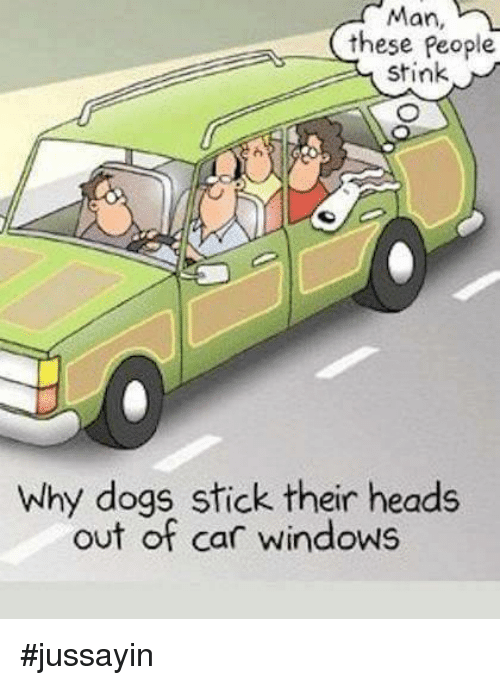 Man These People Stink Why Dogs Stick Their Heads Out of Car