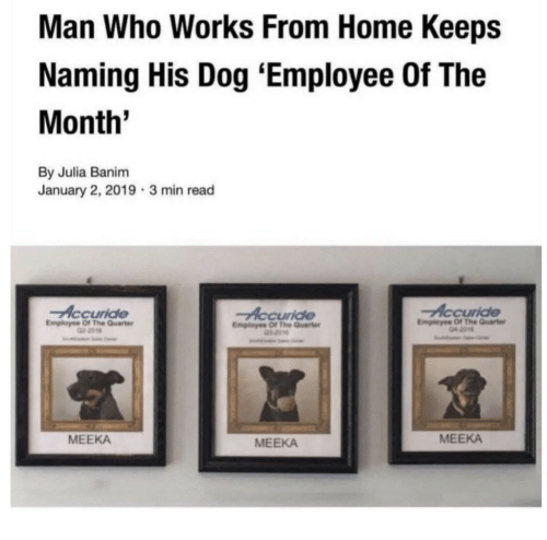 Home, Dog, and Who: Man Who Works From Home Keeps  Naming His Dog 'Employee Of The  Month'  By Julia Banim  January 2, 2019 3 min read  Accuride  Accuride  EmplayeeOf The Qurt  2018  Employee Of The Quarter  Employee Of The Quarte  MEEKA  MEEKA  MEEKA