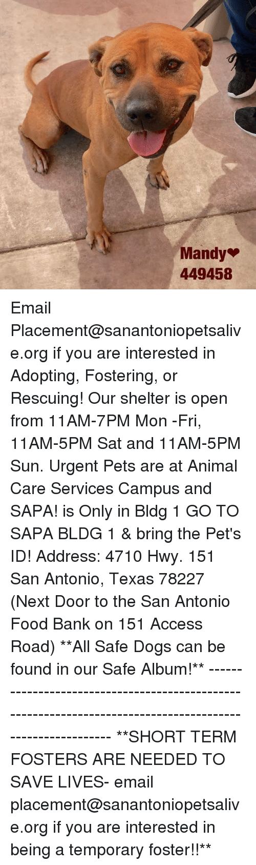 shortness: Mandy  449458 Email Placement@sanantoniopetsalive.org if you are interested in Adopting, Fostering, or Rescuing!  Our shelter is open from 11AM-7PM Mon -Fri, 11AM-5PM Sat and 11AM-5PM Sun.  Urgent Pets are at Animal Care Services Campus and SAPA! is Only in Bldg 1 GO TO SAPA BLDG 1 & bring the Pet's ID! Address: 4710 Hwy. 151 San Antonio, Texas 78227 (Next Door to the San Antonio Food Bank on 151 Access Road)  **All Safe Dogs can be found in our Safe Album!** ---------------------------------------------------------------------------------------------------------- **SHORT TERM FOSTERS ARE NEEDED TO SAVE LIVES- email placement@sanantoniopetsalive.org if you are interested in being a temporary foster!!**