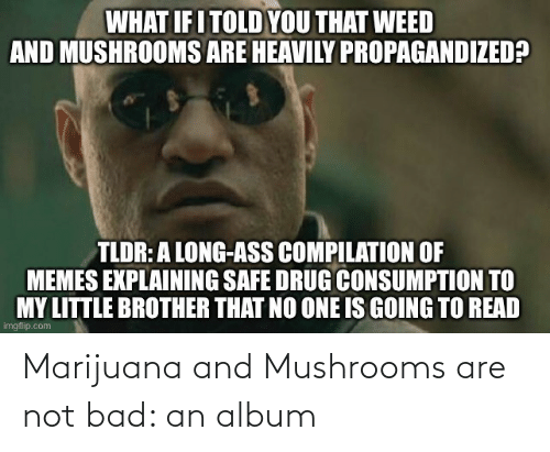 Are Not: Marijuana and Mushrooms are not bad: an album