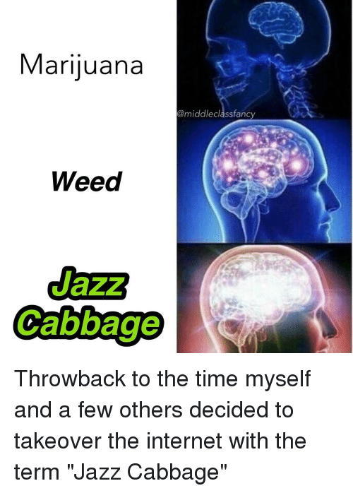 "fanciness: Marijuana  @middle class fancy  Weed  Cabbage Throwback to the time myself and a few others decided to takeover the internet with the term ""Jazz Cabbage"""